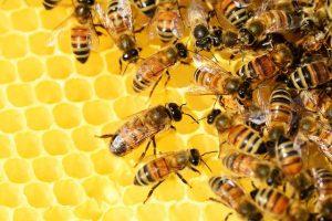 Produkty pszczele na wagę lepszego samopoczucia